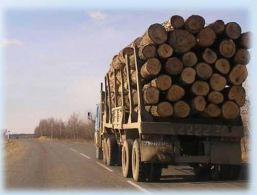 Измерение габаритов штабеля леса, перевозимого автотранспортом